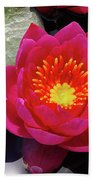 Hardy  Day Water Lily Beach Towel