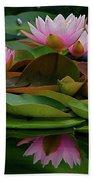 Hardy Pink Water Lilies Beach Towel