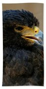 Harris Hawk - Open Mouth Beach Towel by Sue Harper