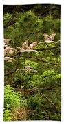Harris Neck Ibis In Flight Beach Towel