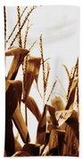 Harvest Corn Stalks - Gold Beach Towel