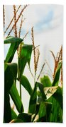 Harvest Corn Stalks Beach Towel