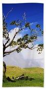 Hawaii Koa Tree Beach Towel