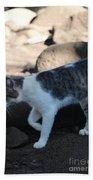 Hawaiian Feral Cat 2 Beach Towel