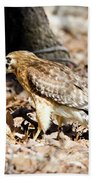 Hawk And Gecko Beach Towel by George Randy Bass