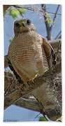 Hawk Gawk Beach Towel