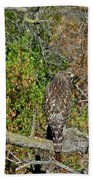 Hawk In Hiding Beach Towel