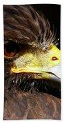 Hawk Intensity Beach Towel by Sue Harper