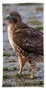 Hawk On A Walk Beach Towel