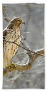 Hawk On Lookout Beach Sheet by George Randy Bass