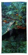 Hawksbill Sea Turtle 4 Beach Towel