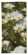 He Loves Me Daisies Beach Towel