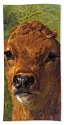 Head Of A Calf Beach Towel