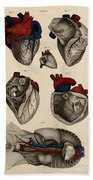 Heart, Anatomical Illustration, 1822 Beach Towel