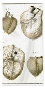 Heart And Muscle Fibers, 18th Century Beach Towel
