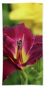Hearts Afire Daylily Beach Towel