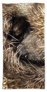 Hedgehog Curled Up Beach Towel