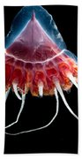 Helmet Jellyfish Beach Towel
