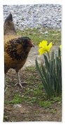 Hen And Daffodils Beach Towel