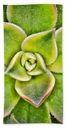 Hens And Chicks  Beach Towel