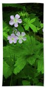 Herb Robert On The Ma At Beach Towel
