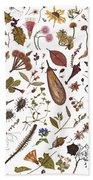 Herbarium Specimen Beach Towel