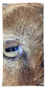 Here's Looking At You Kid - The Truth About Goats' Eyes Beach Towel