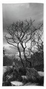 Hermit Island Tree 0192 Beach Towel