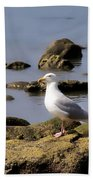 Herring Gull At Charmouth Beach Towel