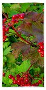 Hi Bush Cranberry Close Up Beach Towel