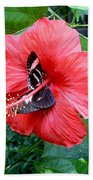 Hibiscus And Butterfly Diners Beach Towel