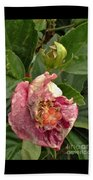 Hibiscus Bloom Closed In The Rain   End View      May           Indiana      Beach Towel