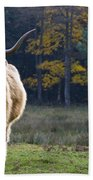 Highland Cow In France Beach Towel