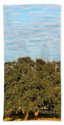Hill Country Tree  Beach Towel
