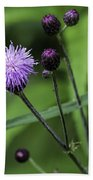 Hill's Thistle Flower And Buds Beach Towel
