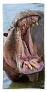 Hippo's Open Mouth Beach Sheet