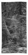 Hoh Rain Forest 3369 Beach Towel