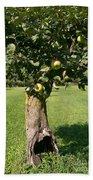 Hollow Apple Tree Beach Towel