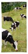 Holstein Cattle Beach Towel