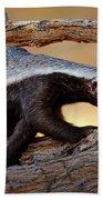 Honey Badger  Beach Sheet