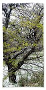 Honey Locust Tree On A Spring Snow Day Beach Towel