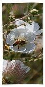 Honeybee Gathering From A White Flower Beach Towel