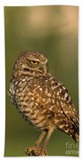 Hoot A Burrowing Owl Portrait Beach Towel
