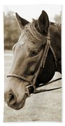 Horse Face Beach Towel