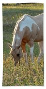 Horse Feeding In Grass Farm With Sunset Light From The Left Beach Towel