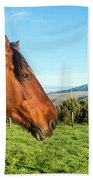 Horse Head Closeup Beach Towel