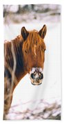 Horse In Winter Beach Towel