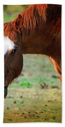 Horse Look Beach Towel