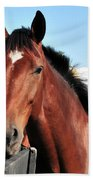 Horse Profile Beach Towel