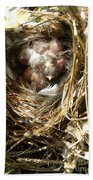 House Wren Family Beach Towel